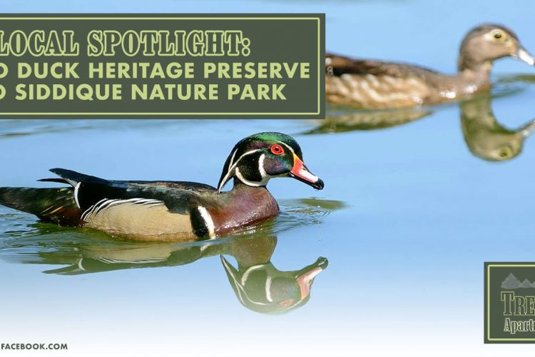 Local Spotlight: Wood Duck Heritage Preserve and Siddique Nature Park