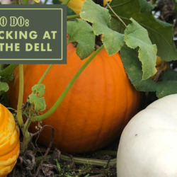 pumpkin picking at Farmer in the Dell