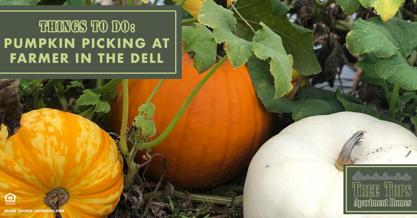 Things to Do: Pumpkin Picking at Farmer in the Dell